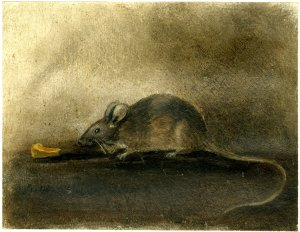John Constable, A Mouse with a piece of cheese, 1824