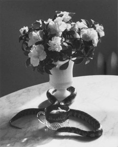 Andre Kertesz Still Life with Snake, 1960