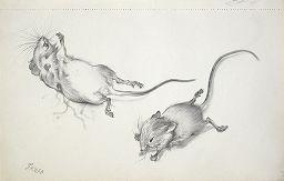 George Grosz Mouse sketchbook, 1950-1952