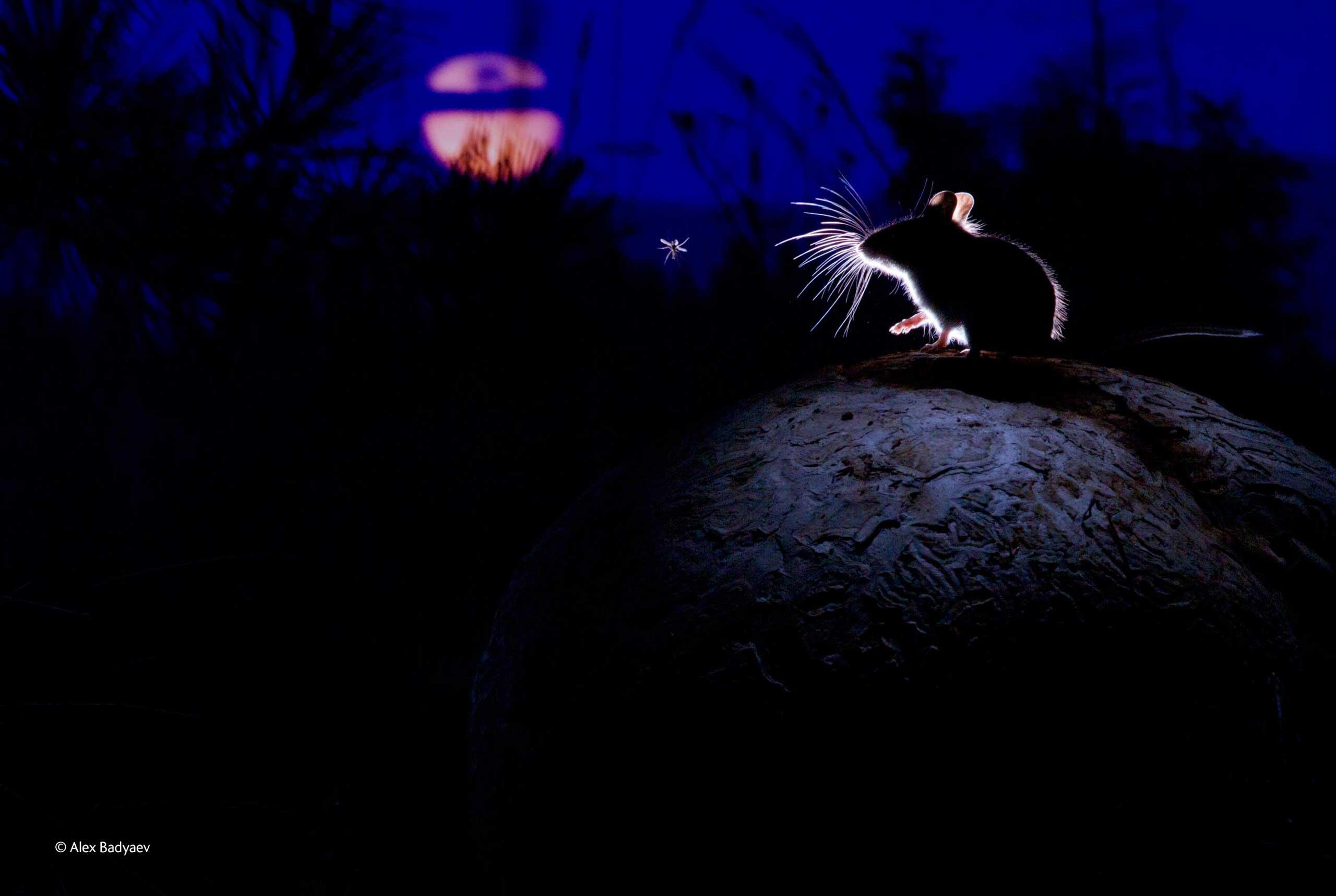 badyaev-contro luce-fotografia-naturalistica