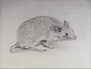 TRoosevelt Mouse